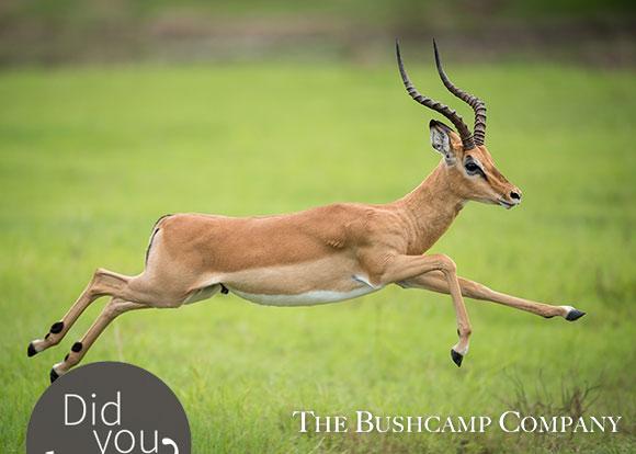 bushcamp company